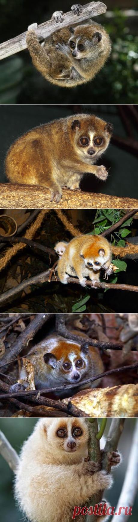 Смотреть изображения лори | Зооляндия