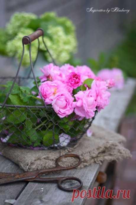 Не ищи прекрасное по свету...  Не копайся в собственной судьбе...  Ведь живёт прекрасное не где-то...  А живёт Прекрасное...в тебе!