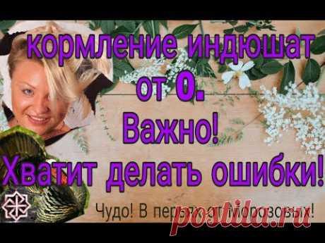КОРМЛЕНИЕ ИНДЮШАТ ОТ 0// 2019г