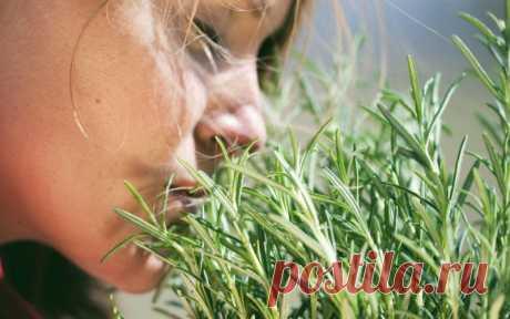 Самая мощная трава для мозгового кровообращения, сердца, сосудов, надпочечников, суставов, кожи, волос и не только! Люди много столетий лечат артрит, подагру, астму, экзему, заболевания печени, желчного пузыря, сердца… Оно помогает восстановить организм после тяжелых болезней! Вы чувствовали, что ваш ум и тело устали? Знайте, что есть мощная и ароматная трава, способная обеспечить необходимую энергию...