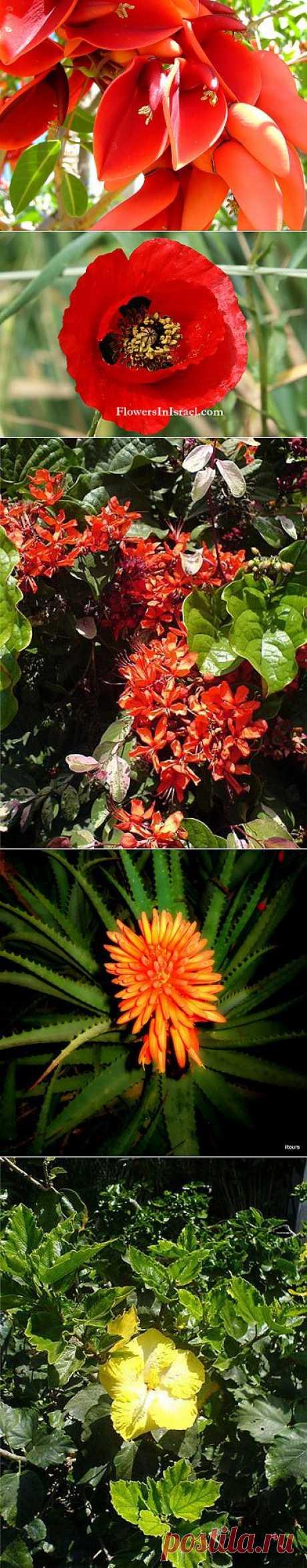 фото цветы Израиля: