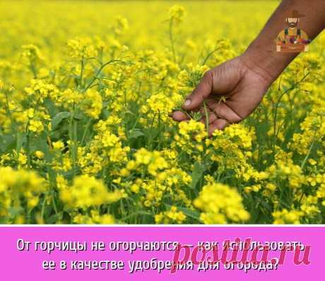 Удобрение не обязательно должно быть неорганического происхождения, чтобы быть эффективным. | OK.RU