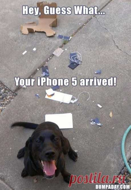 Your IPhone 5 Arrived ! | Gag Bee