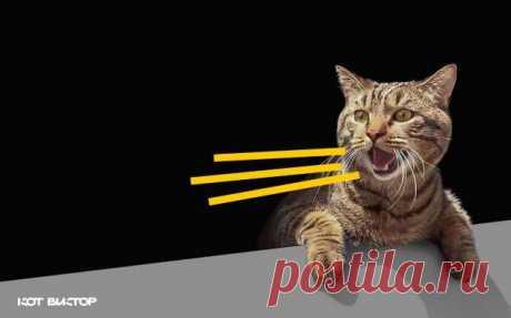 Толстый кот Виктор обзавелся личным брендом . Милая Я