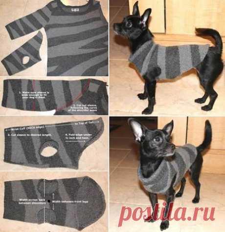 Одежда для собаки из рукава