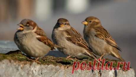 Почему из городов пропадают птицы? Многие жители городов в последние годы отмечают, что в их дворах становится все меньше птиц.