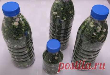 Заготавливаем много зелени на зиму впрок и в магазине покупать не будем