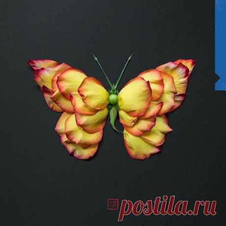 Когда очень любишь бабочек и творить!