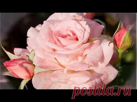 Роза - королева цветов. Красивая музыка, релакс, саксофон. Podryga-on-line.ru - YouTube