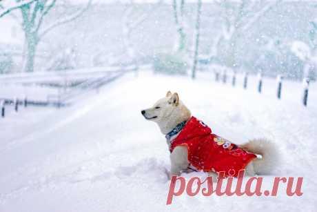 Обморожение и реагенты – главные враги для питомца зимой. Как правильно гулять с собакой в холода? | Рекомендательная система Пульс Mail.ru