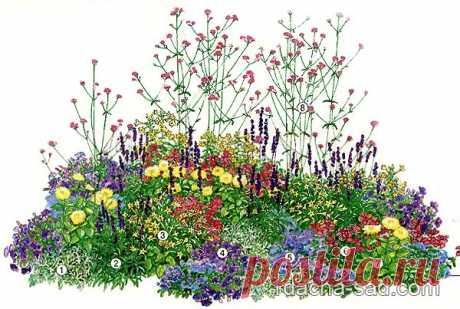 Схема сезонного цветника — клумба на все лето