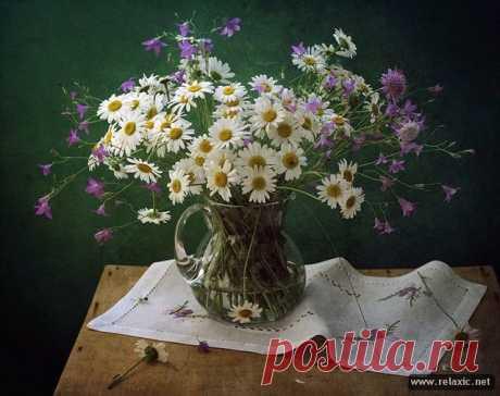 «Предлагаем вашему вниманию подборку прекрасных цветочных композиций, выполненных» — карточка пользователя dbogovyk в Яндекс.Коллекциях