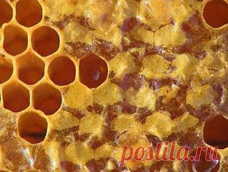 Пчелоподукты: пчелиный воск, маточное молоко, пыльца, перга, пчелиный яд, забрус.
