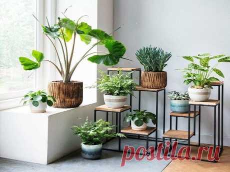 «Домашний сад»: Как правильно и стильно расставить комнатные цветы в доме?