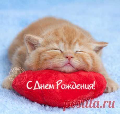 Рыжий кот на красной подушке-сердечке — Скачайте на Davno.ru Рыжий кот на красной подушке-сердечке. Скачайте бесплатно открытку №7204 из рубрики с днем рождения