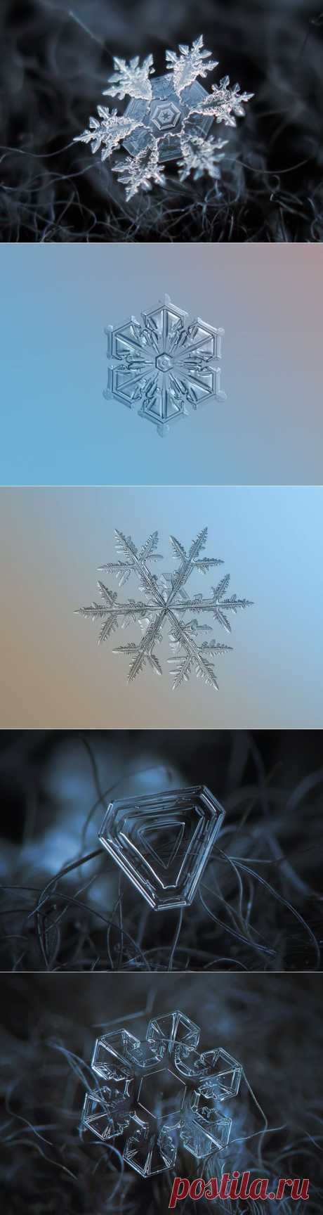 Обычные снежинки в неожиданном ракурсе от фотографа Alexey Kljatov | Фотография | Фотография