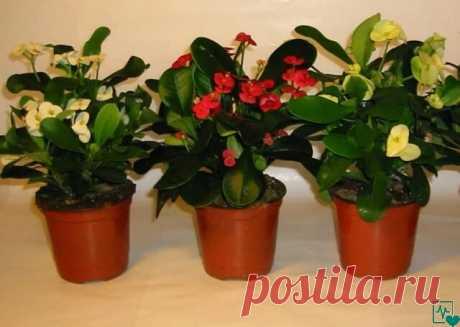 ВСЕГО СЕМЬ ПРИЕМОВ, ЧТОБЫ КОМНАТНЫЕ ЦВЕТЫ РОСЛИ КАК НА ДРОЖЖАХ Возьмите на заметку! При выборе комнатного растения мы всегда обращаем внимание на внешний вид листьев и цветов, форму. Но каждое растение имеет свою индивидуальную энергетику, влияя на состояние человека. Красивое комнатное растение — это, прежде всего правильный уход и условия содержания. Даже небольшие погрешности в уходе могут привести к появлению коричневых сухих пятен или высыханию кончиков или краев листьев.