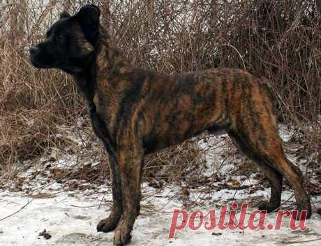 Породы собак: Дневник пользователя Run: Дневники - женская социальная сеть myJulia.ru