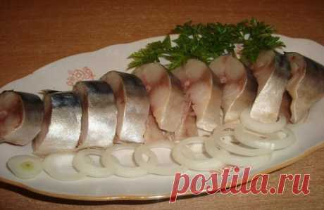 We SALT a herring and a mackerel