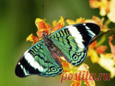 Цветы и бабочки - беспечный мир цветной...