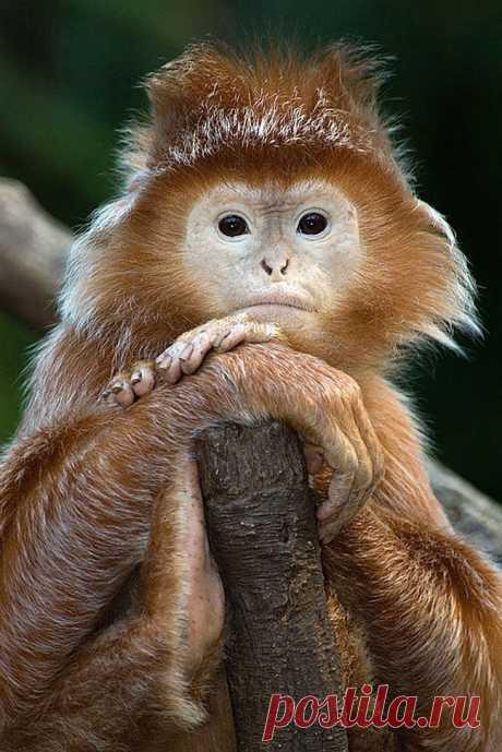 Новые фотографии милые и смешные животные.