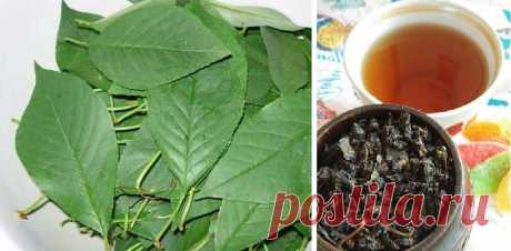Я давно не купую чай, бо роблю його сама - з листя дерев і кущів, які ростуть біля дому. Чай виходить дуже ароматний, із яскраво вираженим фруктовим смаком. А все тому що не просто сушу листя, а ферментую його. Насправді, це зовсім просто, і я детально про все розповім у рецепті.