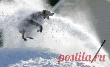 Собачий сноубординг