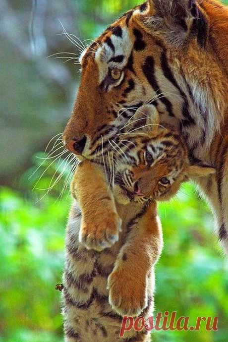 Mother and Cub by Edwin Giesbers | World Wildlife Fund. °