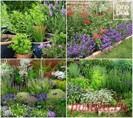 10 идей, как использовать лаванду в дизайне сада | Дизайн участка (Огород.ru)