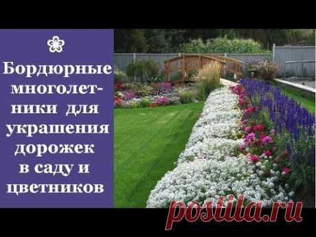 Бордюрные многолетники для украшения дорожек в саду и цветников
