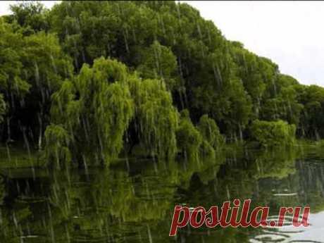 Вальс дождя - YouTube