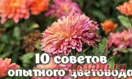 10 СОВЕТОВ ОПЫТНОГО ЦЕТОВОДА