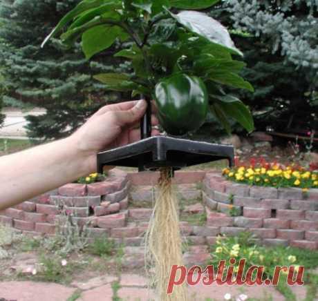 Аэропоника – получаем урожай прямо из воздуха