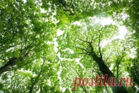 Здравствуй, дерево! тайная жизнь растений