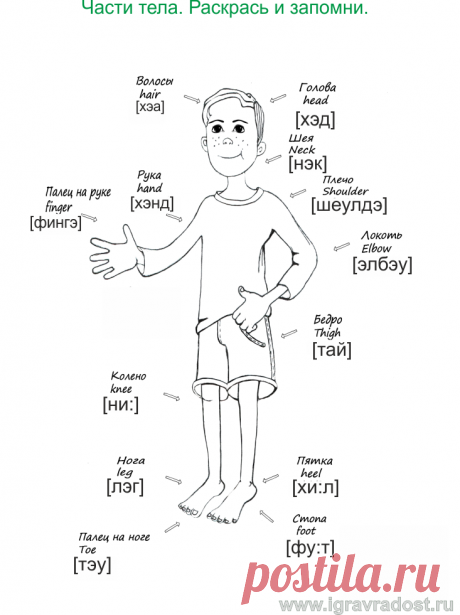 Body.png (733×980)