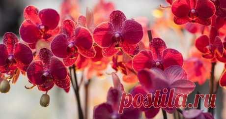 Орхидея-сильный женский талисман! Приметы про орхидею в доме! — КАКАО