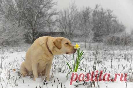 «Весна!» Автор фото: Алексей Яковлев.