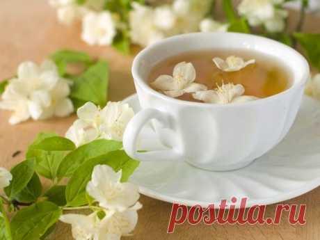 Жасминовый чай зеленый: польза и вред, полезные свойства