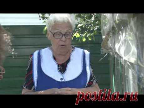 Помидоры любят йод - Пушкинский садовод