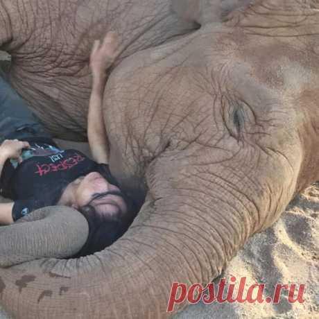 Каждый из слонов в Elephant Nature Park пережил свою трагедию. В результате к животным там относятся настолько трепетно, что даже поют им колыбельные – и те под них засыпают.
