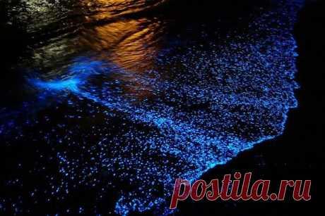 СВЕТЯЩИЙСЯ ПЛАНКТОН При определённых условиях растительный планктон начинает размножаться в океане с сумасшедшей скоростью, образуя под поверхностью воды густой слой цветущих водорослей – так называемую «биолюминесцентную волну». Днём это выглядит не особенно привлекательно, а вот ночью на некоторых пляжах, где водится биолюминесцентная разновидность Noctiluca scintillans, «биолюминесцентная волна» кажется чем-то прямо таки потусторонним.