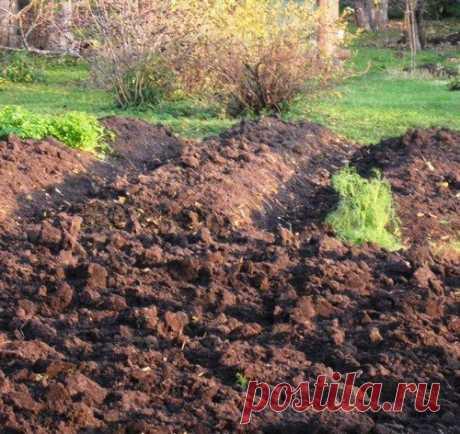 Осеннее обеззараживание почвы для весенних посадок За сезон в огородной почве накапливаются бактерии и грибные споры, особенно если дачники не соблюдают правила севооборота. Накопление патогенной микрофлоры происходит также из-за влияния прохладной и дождливой погоды. Такие болезни, как фитофтороз, серая гниль, мучнистая роса, наносят серьезный урон выращиваемым культурам.