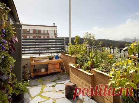 Огород на балконе, фото и идеи — что посадить в мини-огород на лоджии или балконе в квартире | Houzz Россия