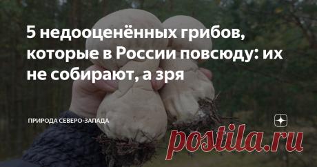 5 недооценëнных грибов, которые в России повсюду: их не собирают, а зря