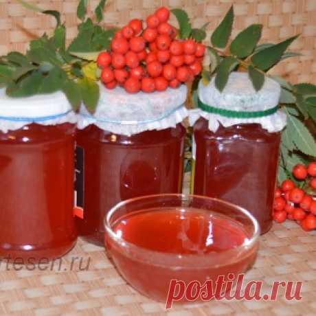 Дары природы: сироп из красной рябины - вкусный и полезный!