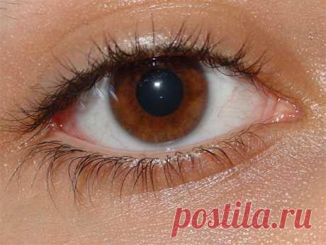 Глаз человека — Википедия