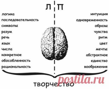 Развитие мозга — шаг на пути к здоровой и счастливой жизни. Самое важное развивать оба полушария и именно бесповоротное вязание легко и просто поможет в этом.