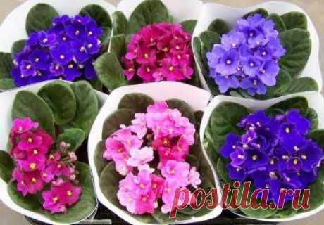 Топ-6 растений по ФЭН-ШУЮ | MerCi - информационный журнал о самом главном