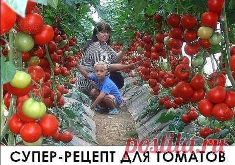 Супер рецепт для томатов. Очень эффективная подкормка!