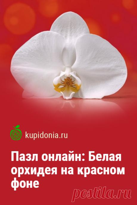 Пазл онлайн: Белая орхидея на красном фоне. Красивый пазл онлайн с белой орхидеей из серии «Красивые цветы». Собирайте пазлы на сайте! Это отличная тренировка для мозга.